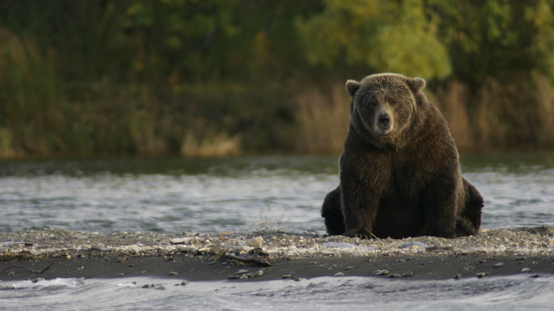 bear market-1