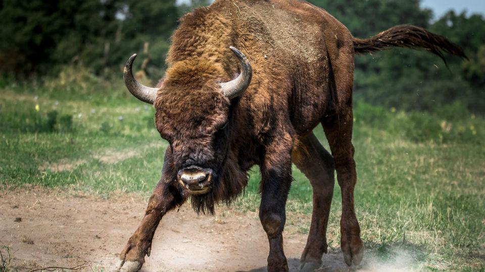 bulls are back